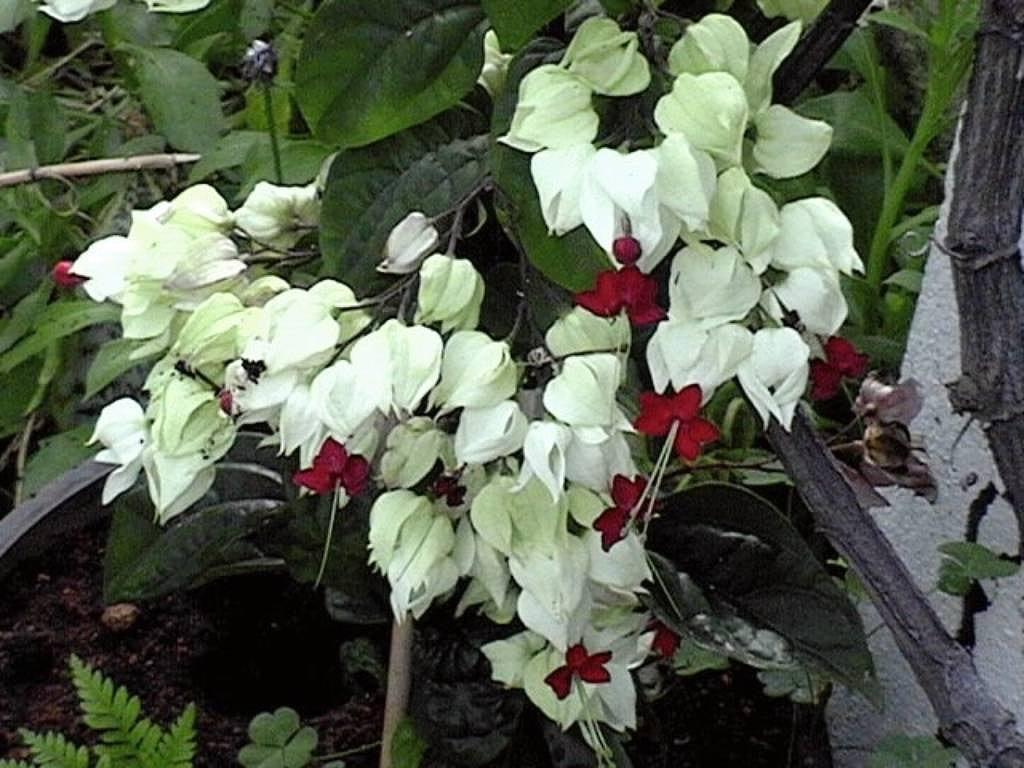 Plantas decorativas para zonas oscuras del hogar for Plantas decorativas
