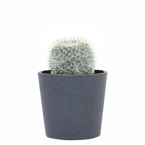 consejos para cuidar un cactus